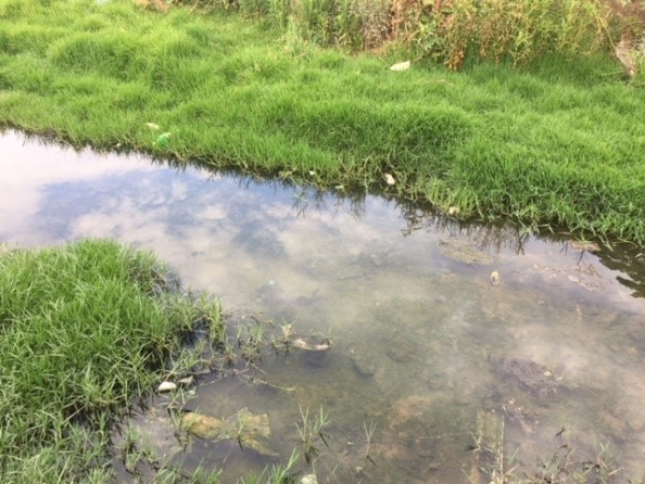 Following the Source of the Clayville Tributary – 17 November 2018