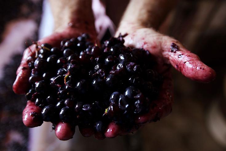 égrapage-fermentation-cuve-fut-chene-ke