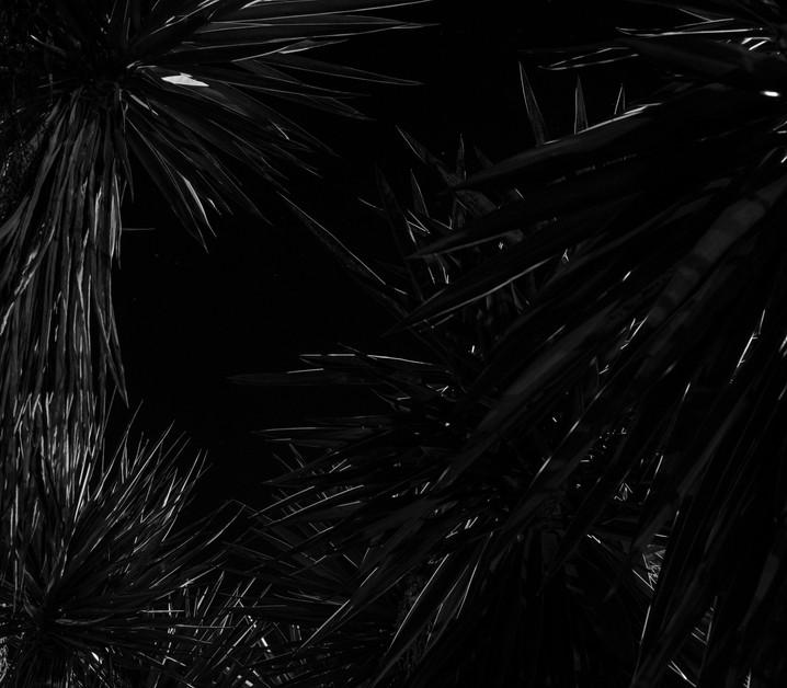 Yucas Nocturnas
