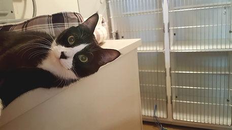 cat care aiken