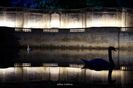 Le lac des cygnes, Nîmes