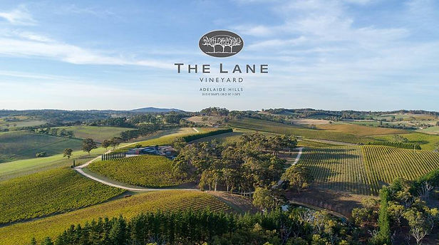 The Lane Vineyard.JPG