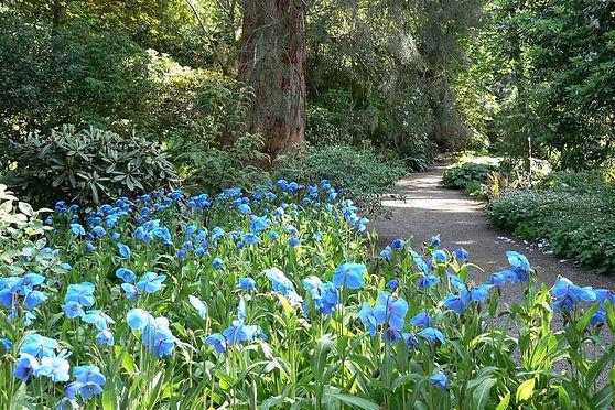 Dawyck Botanic Gardens.JPG