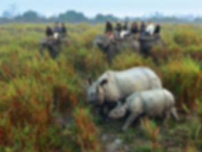 rhino-at-kaziranga-national-park.jpg