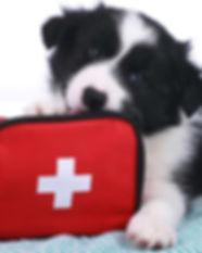 header_first_aid.jpg