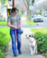 loose-leash-walking-image.jpg