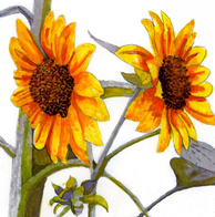Women Are...,  Watercolor Sunflower - Part I