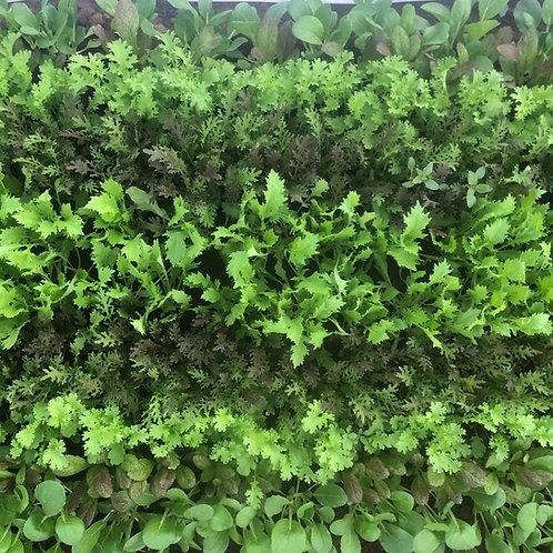 Spring Veggie CSA Share • 8 weeks