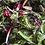 Thumbnail: Fall Veggie CSA Share • 9 weeks