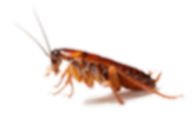 kisspng-cockroach-spider-ant-pest-contro
