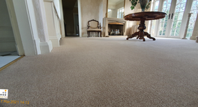 Fresh Clean & Vibrant Cut Pile Carpet