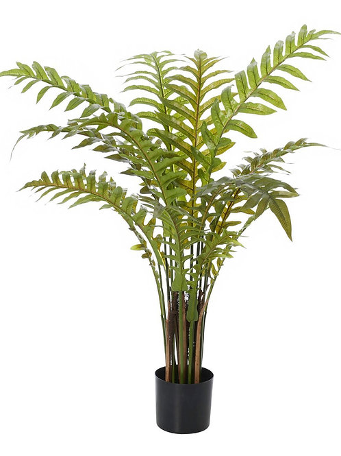 Hares Foot Fern - Potted