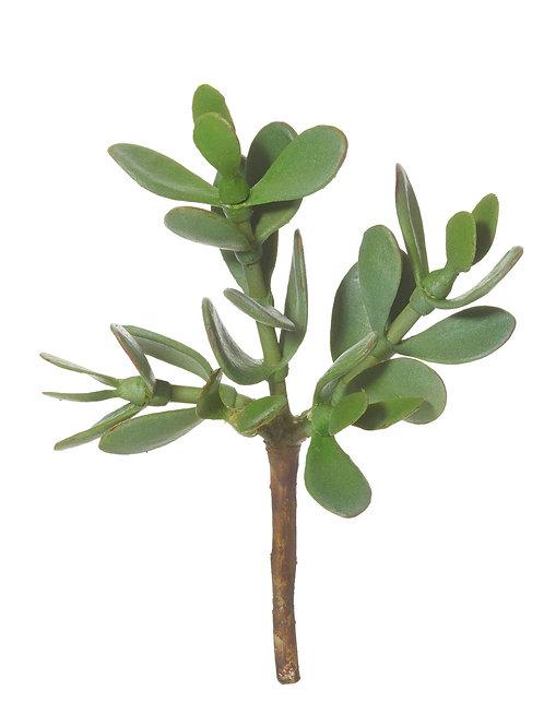 Jade Plant - Loose
