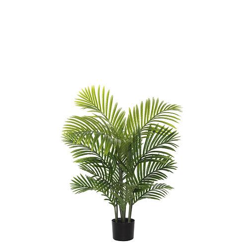 Areca Palm Tree - Potted