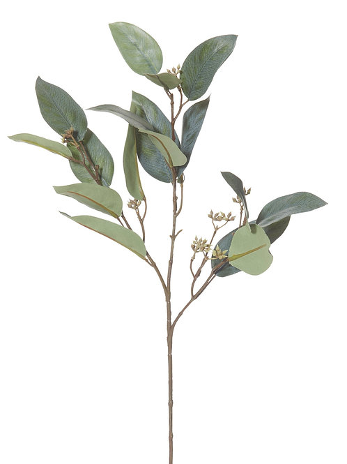 CLEARANCE Eucalyptus Seed Spray
