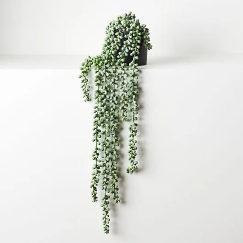 String of Pearls in Pot - Grey