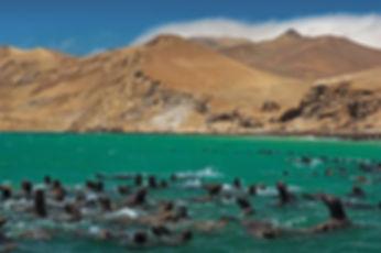 islas-ballestas-10.jpg