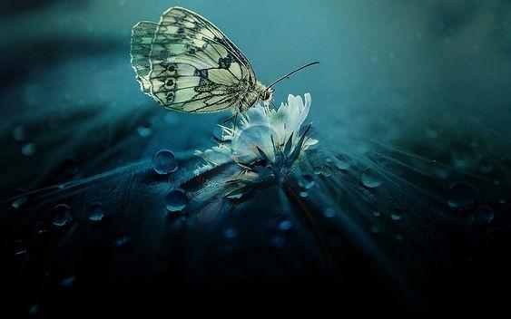 butterfly2-header.jpg