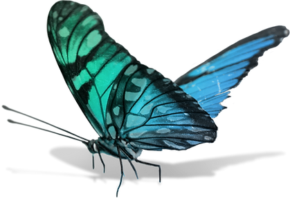 page-butterfly.png