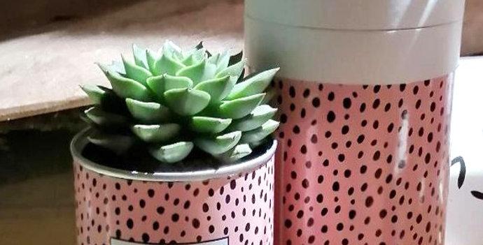 Cactus Message au choix