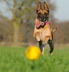 dog boarding kennel chambersburg pa