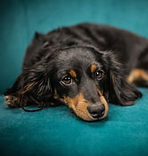 chambersburg pet sitting pet care dog walker