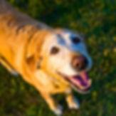 dog walking pet sitting chambersburg