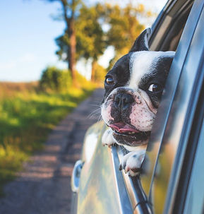 dog walker pet care chambersburg pennsylvania