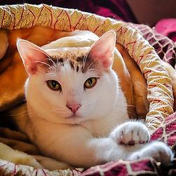 cat sitting chambersburg pa