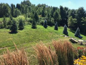 byrd lawn 4.JPG