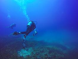 scuba-divers-swimming-live-coral-reef-full-fish-sea-anemones.jpg