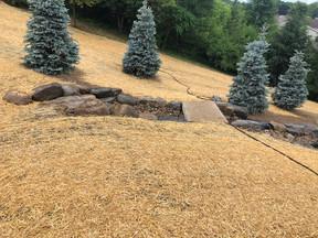 byrd lawn 1.JPEG