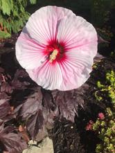 prado plantings 7.jpg