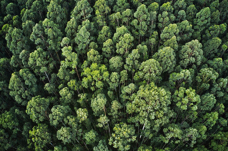 overhead-aerial-shot-thick-forest-with-b
