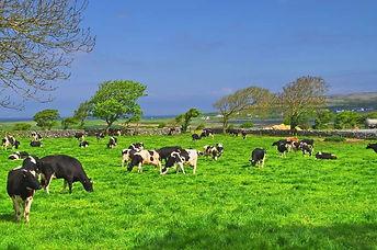 Irish Dairy Farm