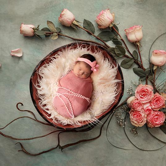 rosesnew.jpg