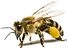 PikPng.com_bee-png_582928.png