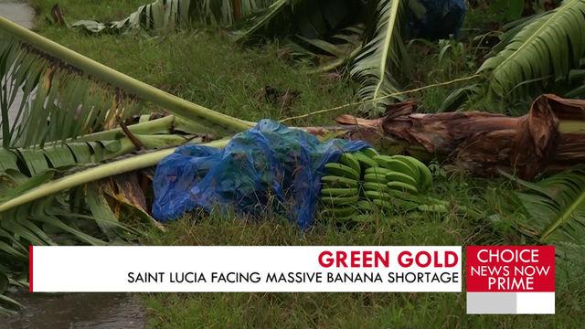 Saint Lucia is facing a massive banana shortage