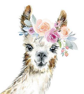 pretty llama.jpg