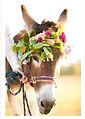 girl donkey.jpg