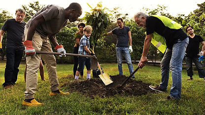 Group%20Planting%20a%20Tree_edited.jpg