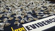 PDI detuvo a madre e hijo dedicados a la venta de droga