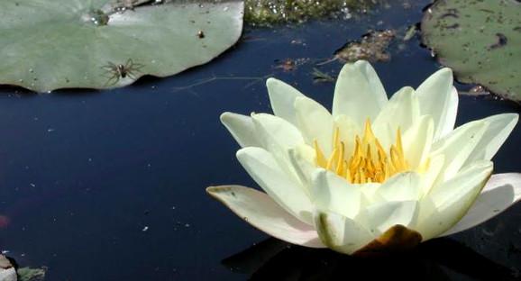 ¿Cómo son las plantas que viven en ríos y lagunas de Chile? Corma lo aborda en nueva Guía de Campo