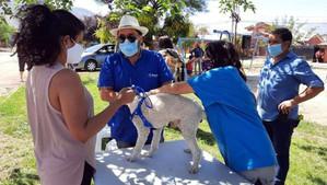 """Inician campaña para desparasitación de mascotas denominada """"Mi Mascota, Mi Compromiso"""""""