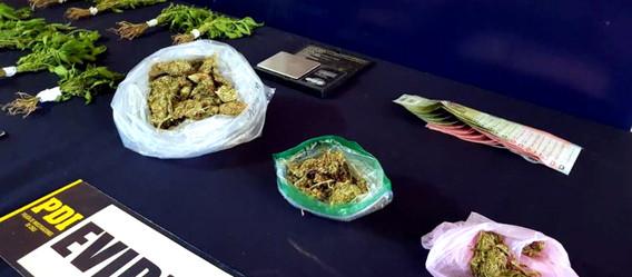 PDI erradica foco de microtráfico de cannabis en Los Andes