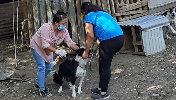 Más de dos mil mascotas se atenderán en operativos veterinarios en terreno en Calle Larga
