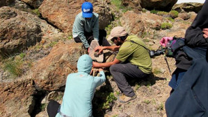 Con cámaras trampa estudiantes UPLA y habitantes registran fauna silvestre de Putaendo