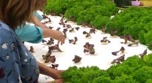 Agricultora de San Esteban se adaptó a los cultivos hidropónicos para combatir la sequía