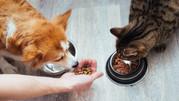 ¿Pueden las mascotas comer lo mismo que sus dueños?