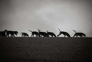 Hounds on the horizon